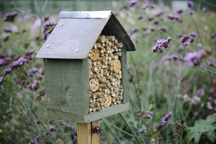 10 Cool Ways To Attract Wildlife To Your Garden