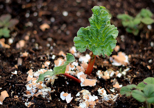 15 Simple Gardening Hacks You Probably Didn't Know About