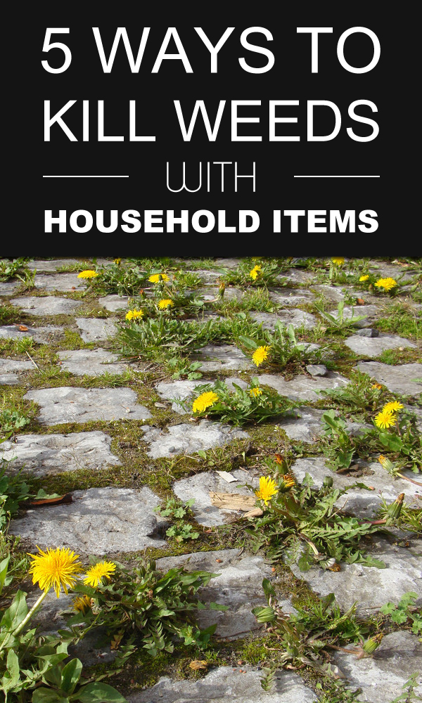 5 Ways To Kill Weeds With Household Items